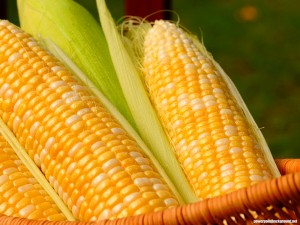 Corn Background for Powerpoint