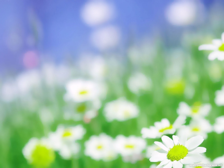 Daisies Powerpoint Background