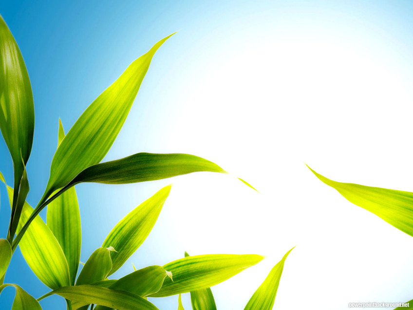 HDR Leaves And Blue Sky Powerpoint Background