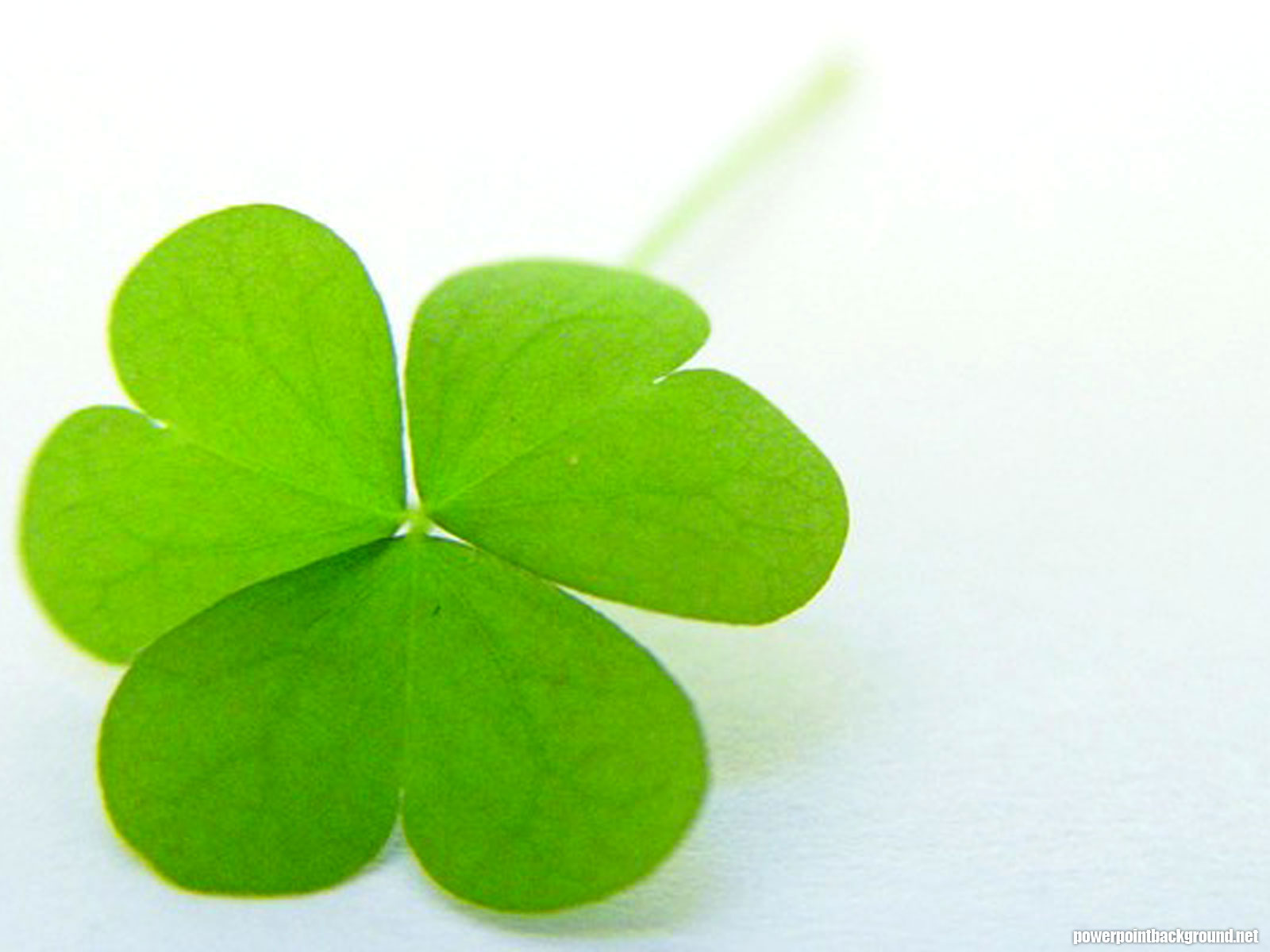 Clover Powerpoint Background